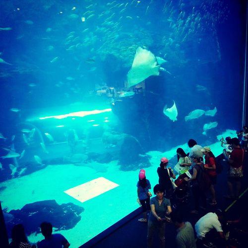 Aquarium Taking Photos EyeEm Best Shots Sight Seeing