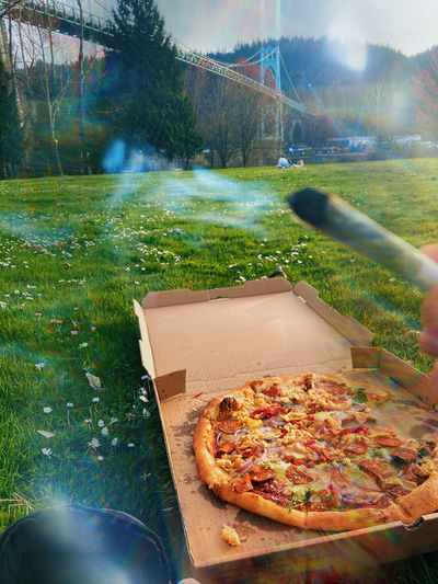 High angle view of pizza on plant in field