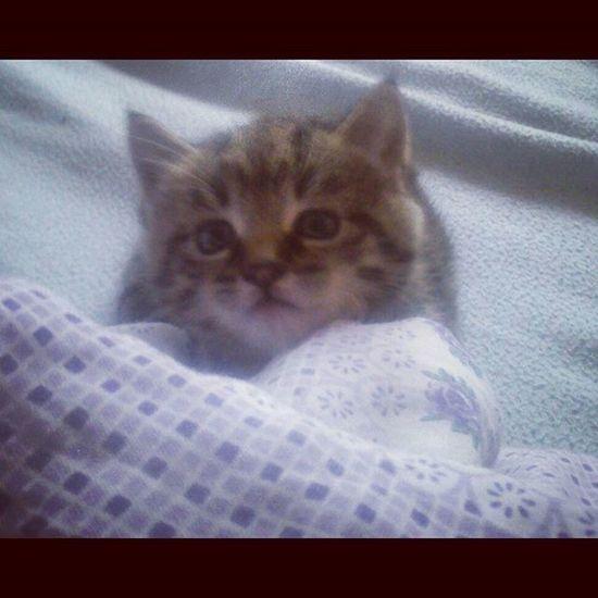 🐱🐱🐱 Kittycat Kiten Littlecat  Cat Amy