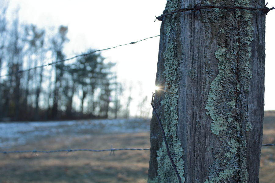 Barbed Wire Blue Ridge Mountains Boone NC North Carolina Blue Ridge Parkway Close-up Day Fence Focus On Foreground Nature No People Outdoors Sky Sunflare Textured  Tree Tree Trunk Wooden Post