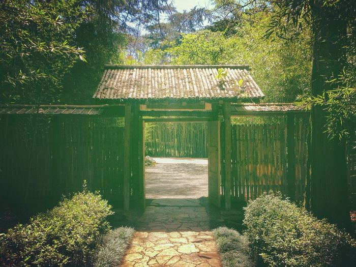 Garden Of The Gods Garden Of Eden Gate To Heaven Bamboo Bamboo Tree... Bamboo Fence Costa Rica Lankester Garden Wanderlust The Only Way Out Is Through The Only Way Is Forward