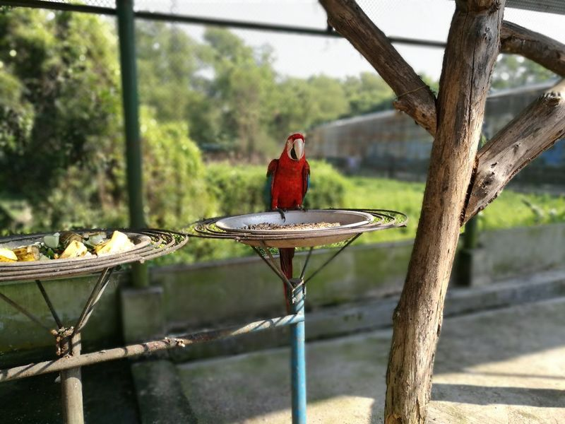 Red Bird Tree Perching Animal Wildlife One Animal Macaw Parrot Macaw Bird Macaw Caninde