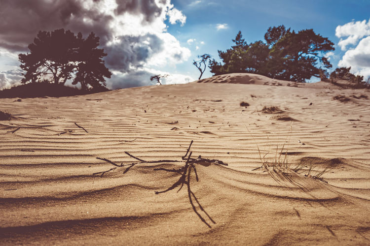 Arid Climate Beauty In Nature Climate Cloud - Sky Day Desert Environment Field Land Landscape Nature No People Non-urban Scene Outdoors Plant Sand Scenics - Nature Sky Sunlight Tranquil Scene Tranquility Tree