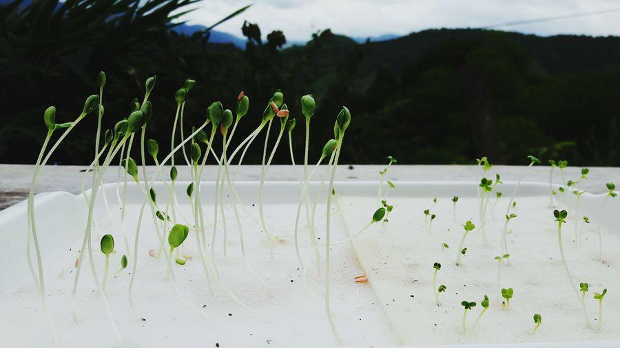 grow Flower Sky