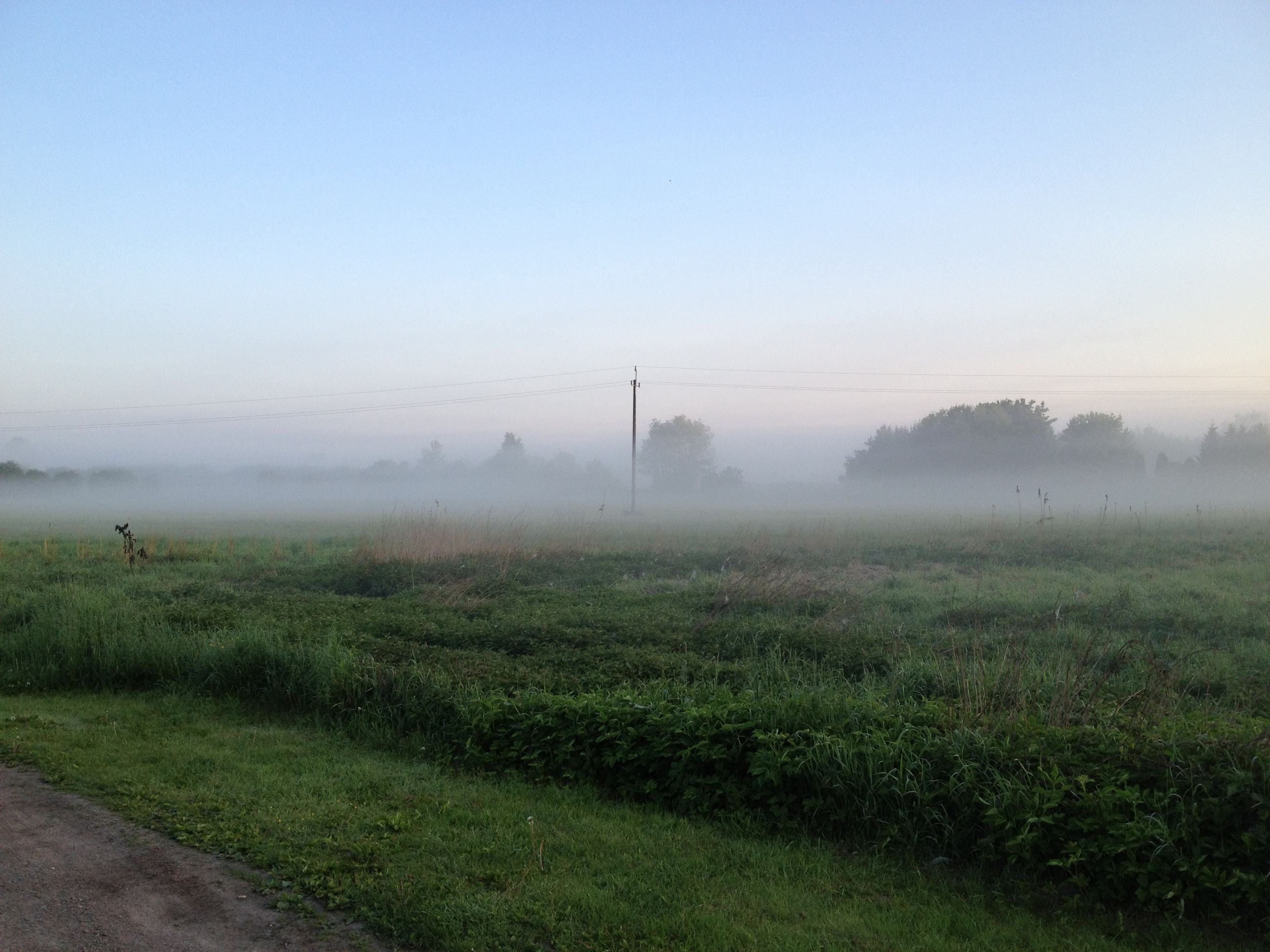 fog, field, grass, foggy, landscape, tranquility, tranquil scene, weather, grassy, nature, beauty in nature, scenics, sky, growth, copy space, green color, tree, no people, rural scene
