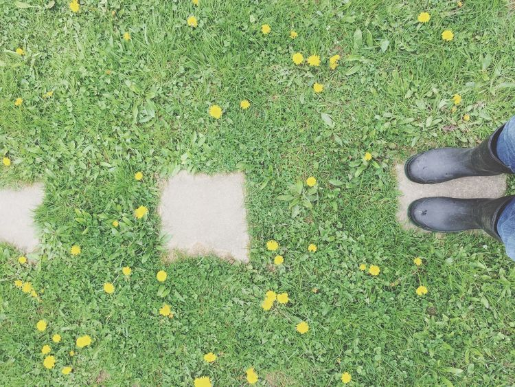 Grass High Angle View Shoe Green Color Low Section Human Leg Field Nature Day Real People Outdoors Standing Growth Flower One Person Human Body Part People