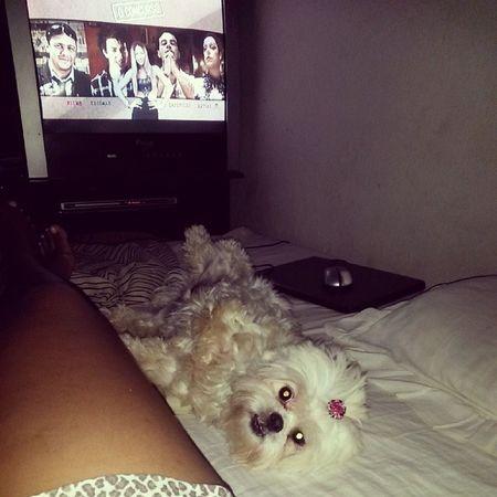 Pra fechar a noite filminho Oconcurso e uma cachorrinha folgada tentando dominar a cama Fuii