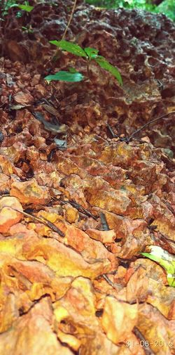 Fallen Leaf Fragility Extreme Close-up Outdoors Geology Physical Geography