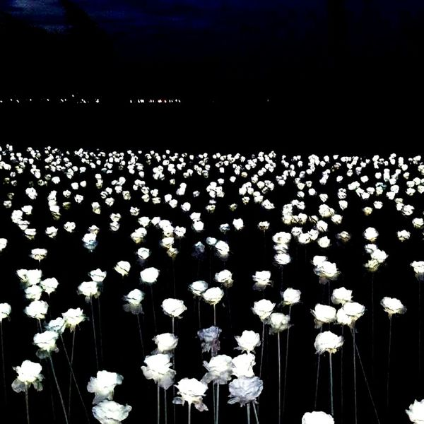 Abundance Indoors  No People Beauty In Nature Night Nature Flower Freshness