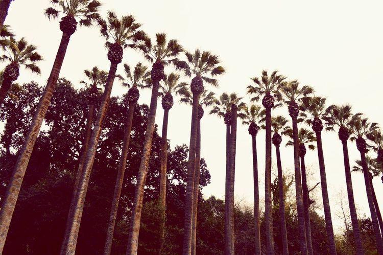 Athens Athensgreece Greece Nationalgarden Beautiful Nature Palm Trees