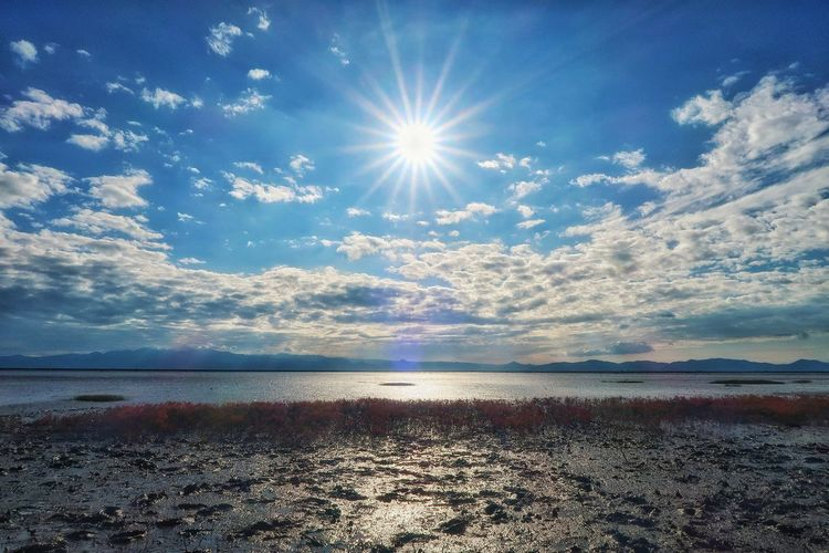 海 有明海 干潟 シチメンソウ 太陽 空 ソラ Sky Nature Sunlight Backgrounds Tranquil Scene Sun Scenics Beauty In Nature Beach Sea Day Wildplant Autumn Flowers Nature Grass Plant Beauty In Nature