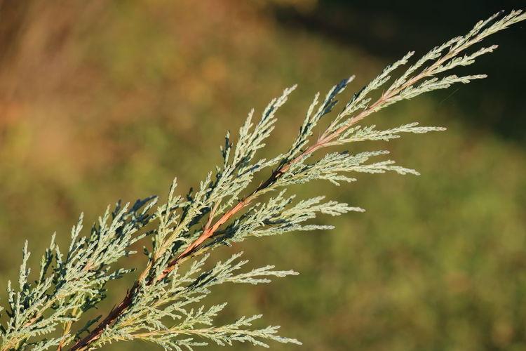 Zweig Growth