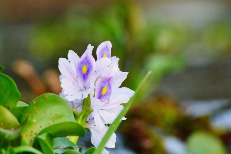Flowers Flower Photography Showcase: February OpenEdit