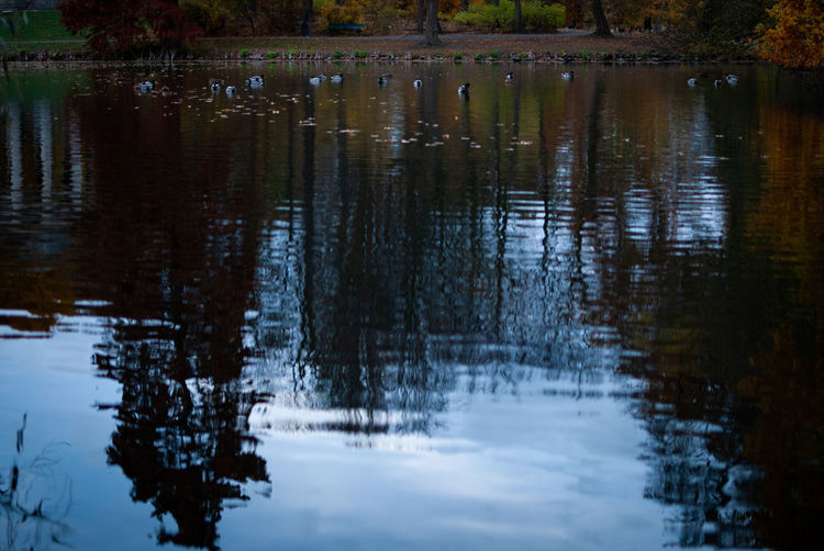 Reflections of