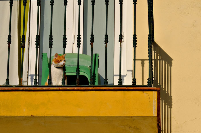 Architectural Feature Architecture Balcony View Balustrade Cat On Balcony Cat Sitting On Balcony Looking Down Day High Contrast Light And Shadow Low Angle View Malaga Spain Multicolored No People Outdoors Sunny Day Sunshine Torremolinos Travel Destinations Yellow Wall Pet Portraits Pet Photography  Paint The Town Yellow