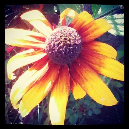 Flor muito estranha