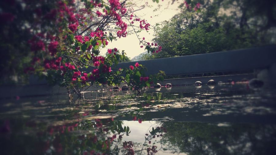 MIRAFLORES B. C. S. First Eyeem Photo