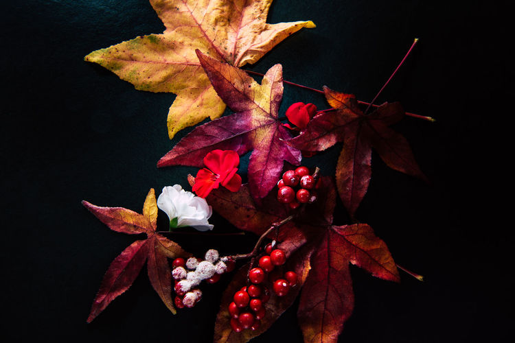 Autumn leaves and berries in a dark but colorful arrangement Plant Part Leaf Plant Nature Freshness Beauty In Nature Fruit Flower No People Flowering Plant Fragility Close-up Vulnerability  Leaves Change Flower Head High Resolution