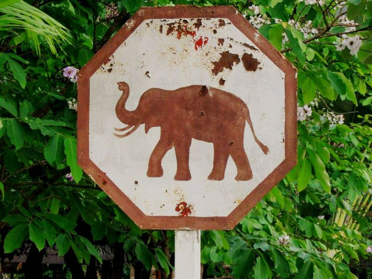 Relaxing Colors Nature Photography Nature Elephant Signal Love