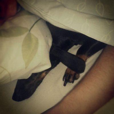 Ops Lovepet Lovedogs Riomemo entaovai entaotoma instamatic lgoptmusl7 dogs sleeping instagram good rjsp 021