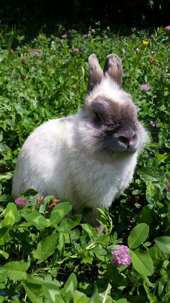 Bunny  Animals Belgrade