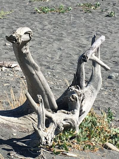 Driftwood Nature Day No People Sunlight High Angle View Land Outdoors Beach Shadow Sand Sculpture Wood - Material
