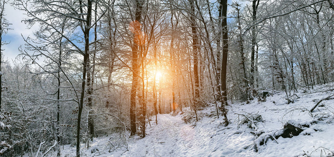 Sun shining through bare trees in forest during winter