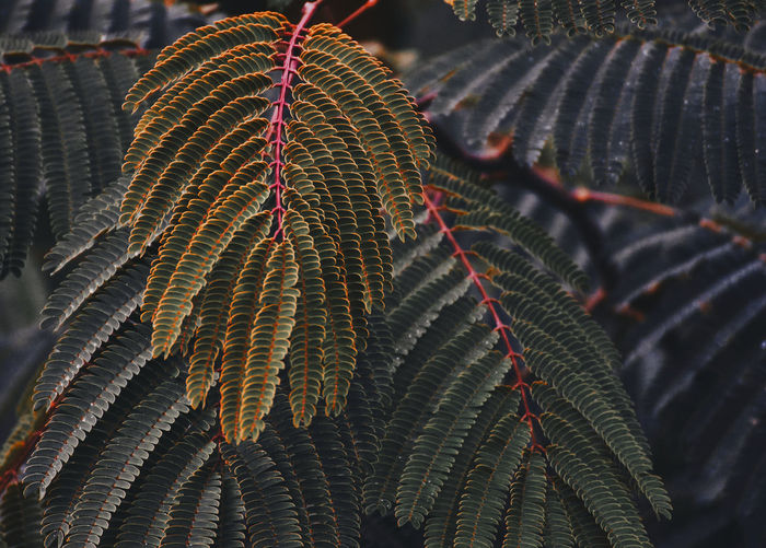 Close-up of plant leaves during autumn