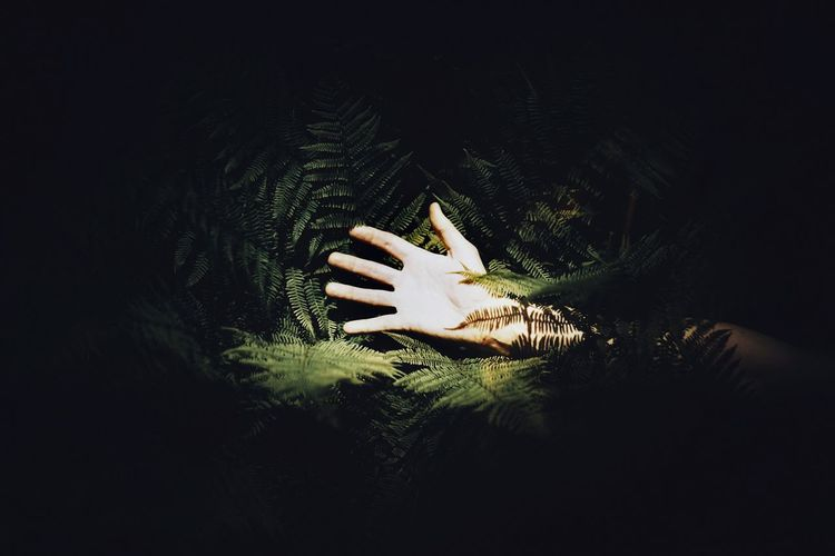 Cropped hand of woman amidst tree at night