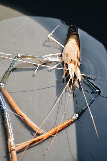 BIG Shrimps River Invertebrate Insect Close-up One Animal Animal Themes Animal Animal Wildlife Zoology