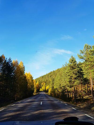 Tree Road Road