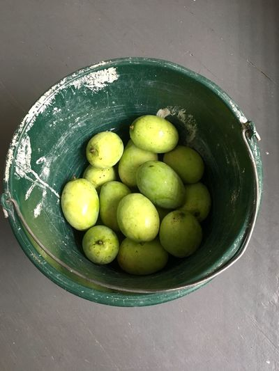 Green mangoes in a green bucket Indian Fruit Indian Fruits Food Bucket Mangoes Mango Green Food Food And Drink Healthy Eating Freshness Wellbeing Green Color Still Life Fruit Indoors  No People High Angle View Table Container Directly Above Close-up Citrus Fruit Consumerism Water Bowl Studio Shot