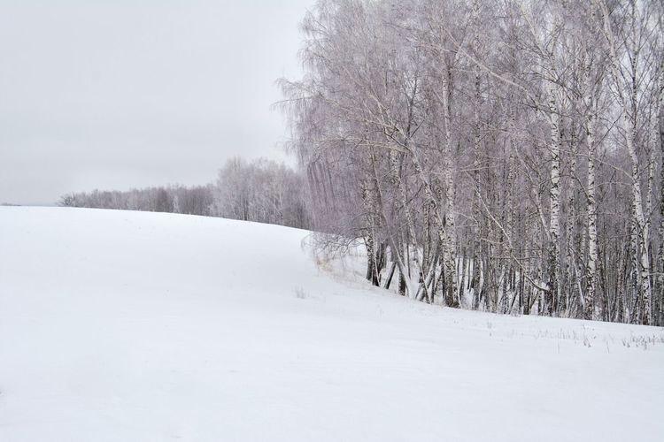 Bare Trees By Snow Covered Field Against Sky