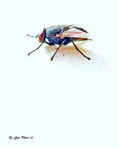 Close-up Insect Macro