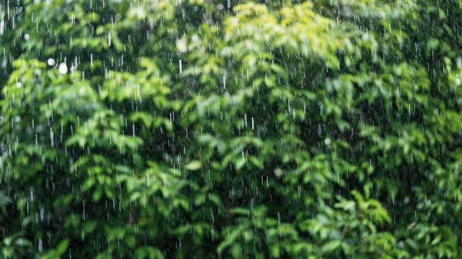 Full frame shot of wet trees