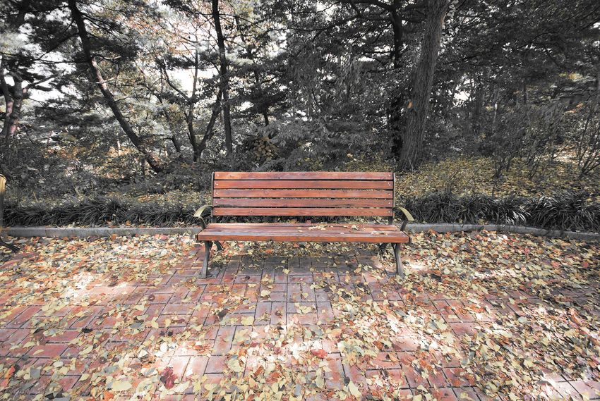 Lonely park bench waiting for lovers. Enjoying Life Fall Colors Still Life Moments