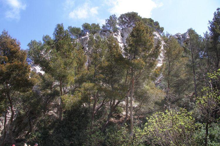 Trees Intothewild