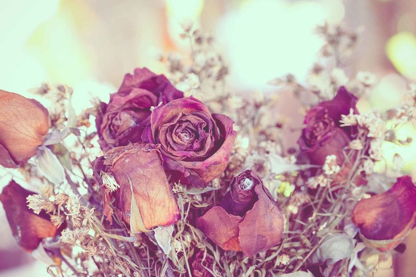 Flowers Dried Plant Flower Flowering Plant Beauty In Nature Nature Close-up Rose - Flower Vintage Photo Vintage Style Romantic Dry Flower  Drying Dry Leaves