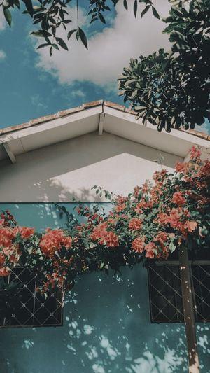 Home Plant