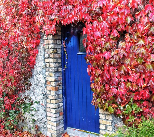 The Blue Door. EyeEm Nature Lover In The Landscape Taking Photos Tadaa Community