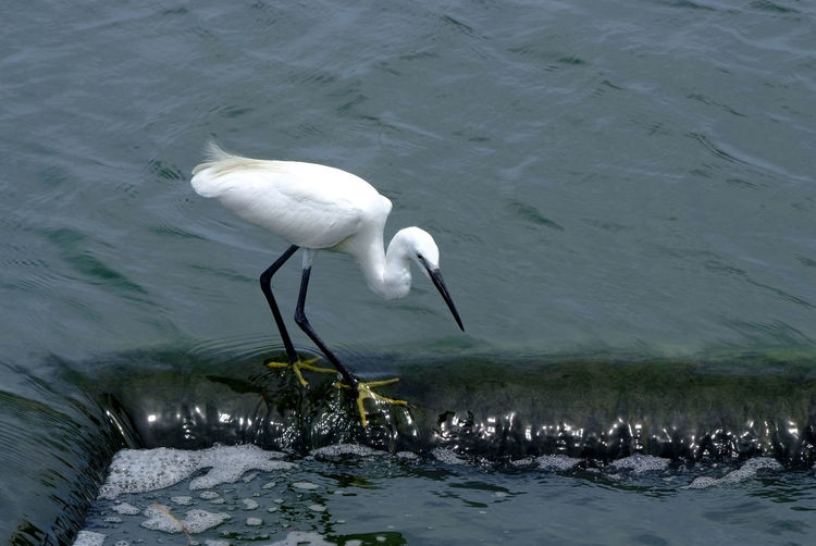 High angle view of bird in lake
