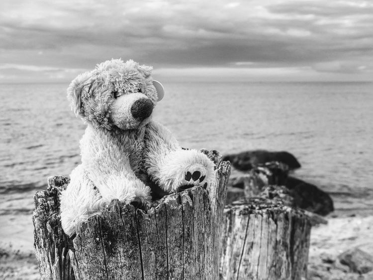 The KIOMI Collection Nature Teddy Teddybear Baltic Sea Ocean View Coastline Nature_collection Bnw Blackandwhite Bnw_collection B&w Perspective Photography Black And White Black & White Black&white Taking Photos Oceanview Nature Photography From My Point Of View Ocean Close-up Feelings Feeling Inspired Macro