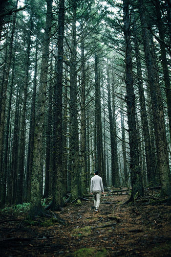 man in white walking in the forest Adult Adults Only Backview Beauty In Nature Dark Forest Growth Landscape Man Nature Nature One Man Only One Person Outdoors Oversized Real People Tree Tree Trunk Walk Whimsical WoodLand Miles Away Long Goodbye Lost In The Landscape Love Yourself