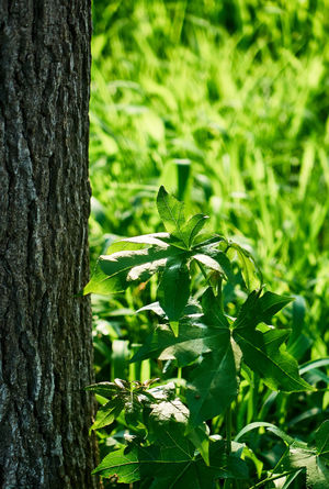 Bright Summertime Sunlight Beauty In Nature Bright Lit Close-up Day Field Focus On Foreground Green Color Growth Land Leaf Nature No People Outdoors Plant Plant Part Summer Sunlight Textured  Tranquility Tree Tree Trunk Trunk