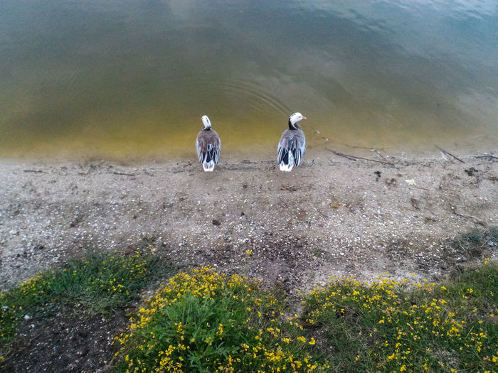 Symmetry in the nature Symmetry Ducks At The Lake Birds On The Lake Lakeshore Grass And Water Nature Photography Landscape Couple Shore Growing