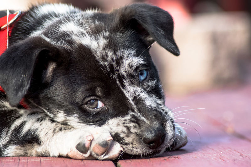 I'm so tired...woof Check This Out Taking Photos Enjoying Life Taking Photos Puppy Love ❤ Pets Corner Puppy Eyes Animallovers Puppy