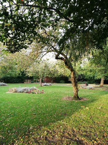Grass Green Autumn Park Suburban Park Grass Tree Nature Green Color Growth Outdoors No People Day Beauty In Nature