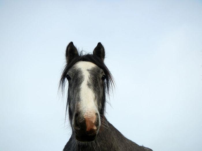 Horse Horse Head