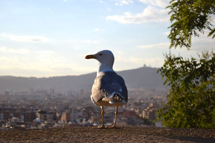 Seagull Perching On Retaining Wall Over City Against Cloudy Sky