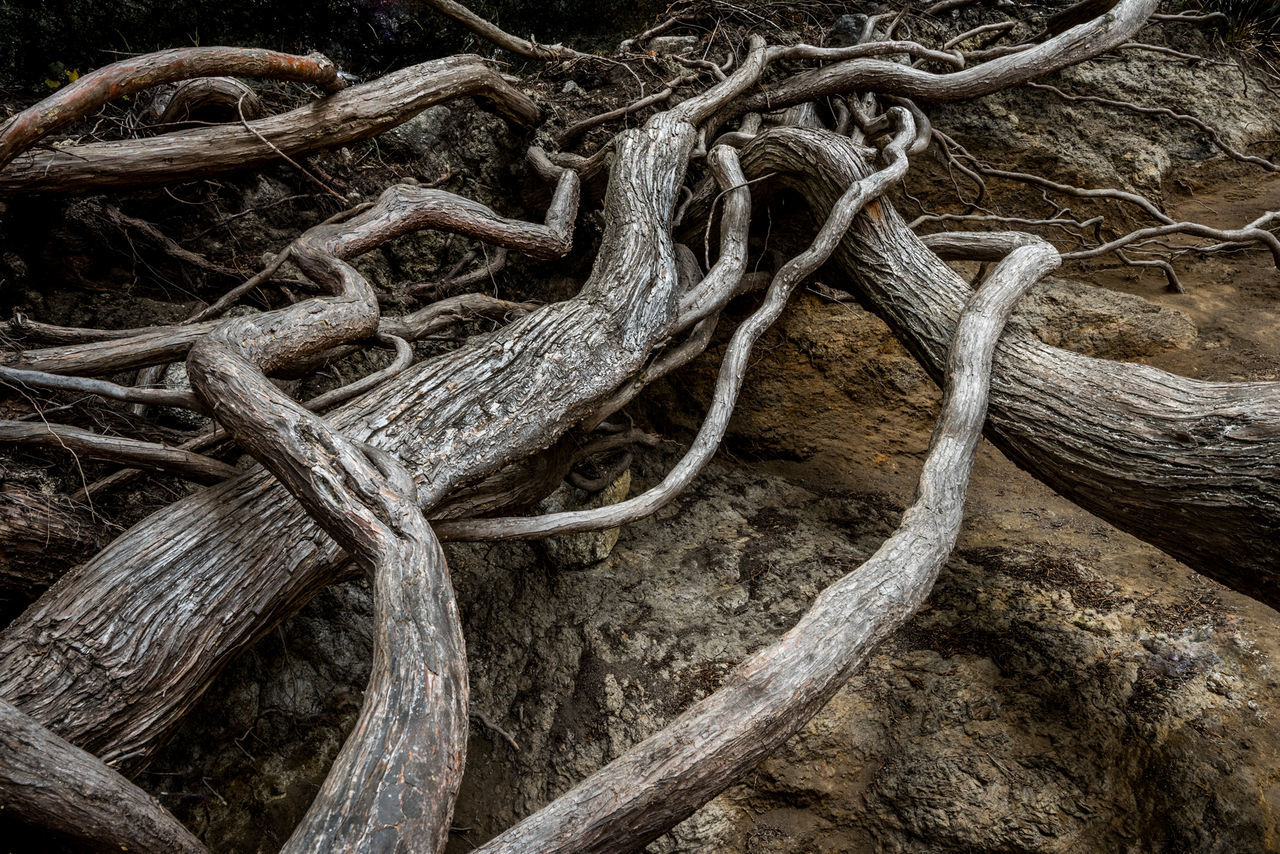 Fallen Tree At Forest